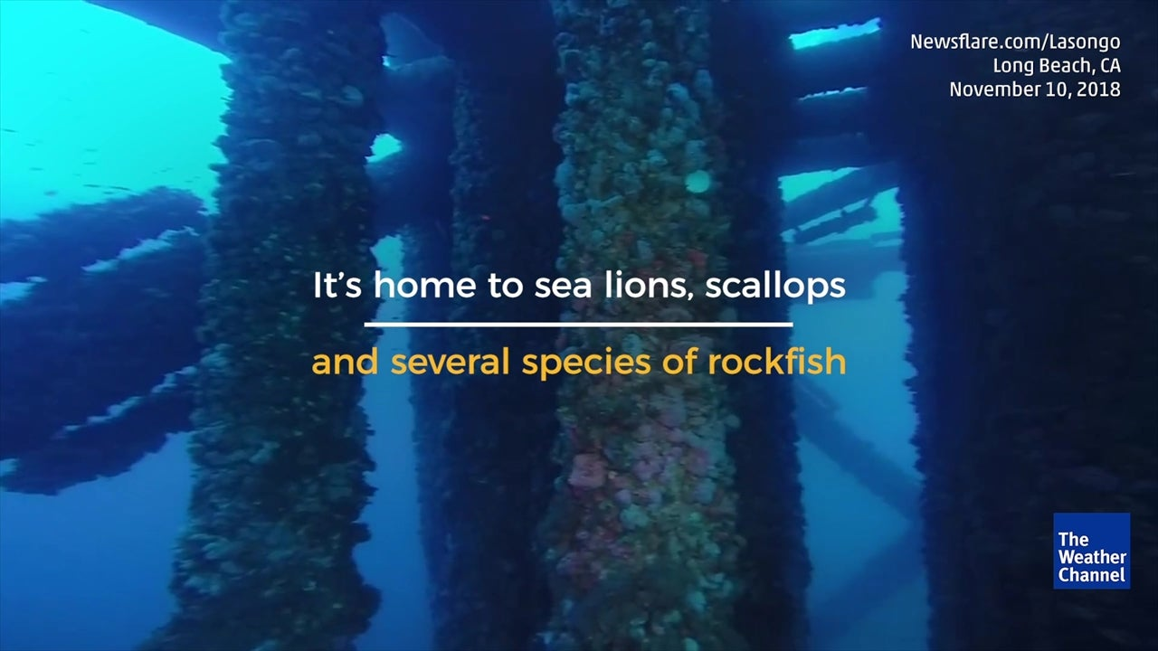 VIDEO: Footage from the deep underneath an oil platform off California