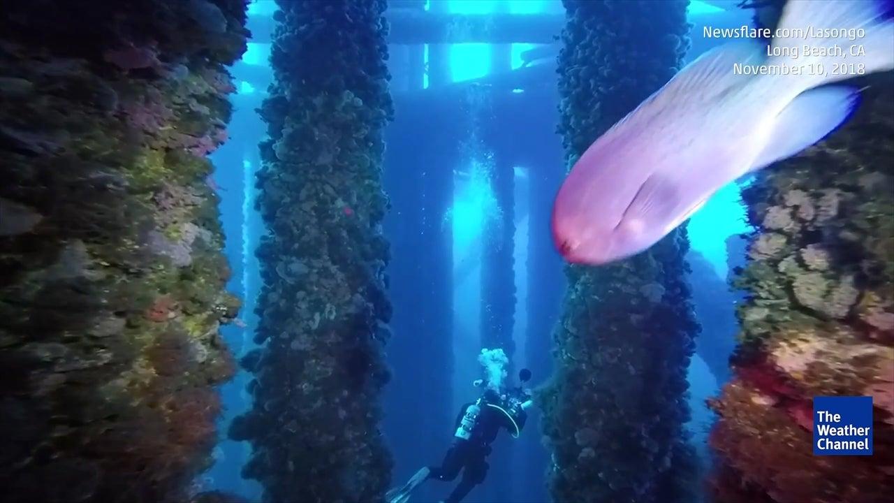 Watch Surreal Dive Beneath Oil Rig