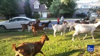 Kids Overtake Neighborhood