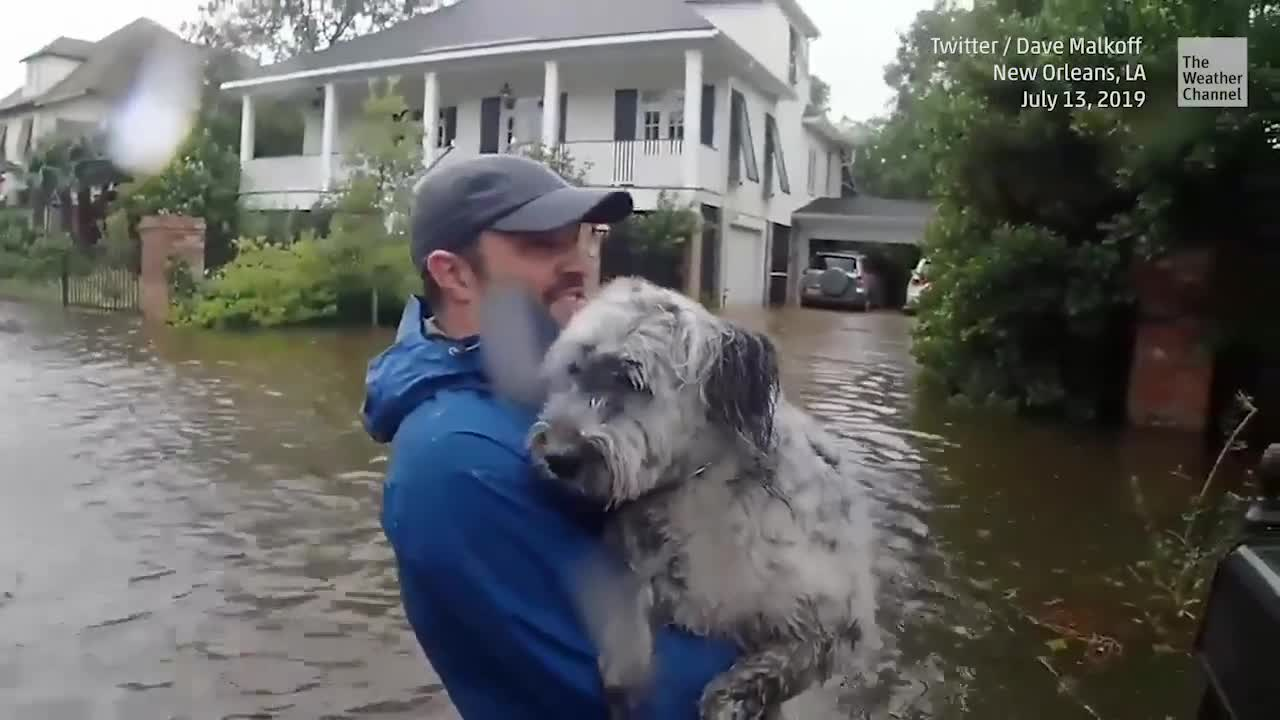 Louisiana Dog Has to Go in Barry's Floodwaters