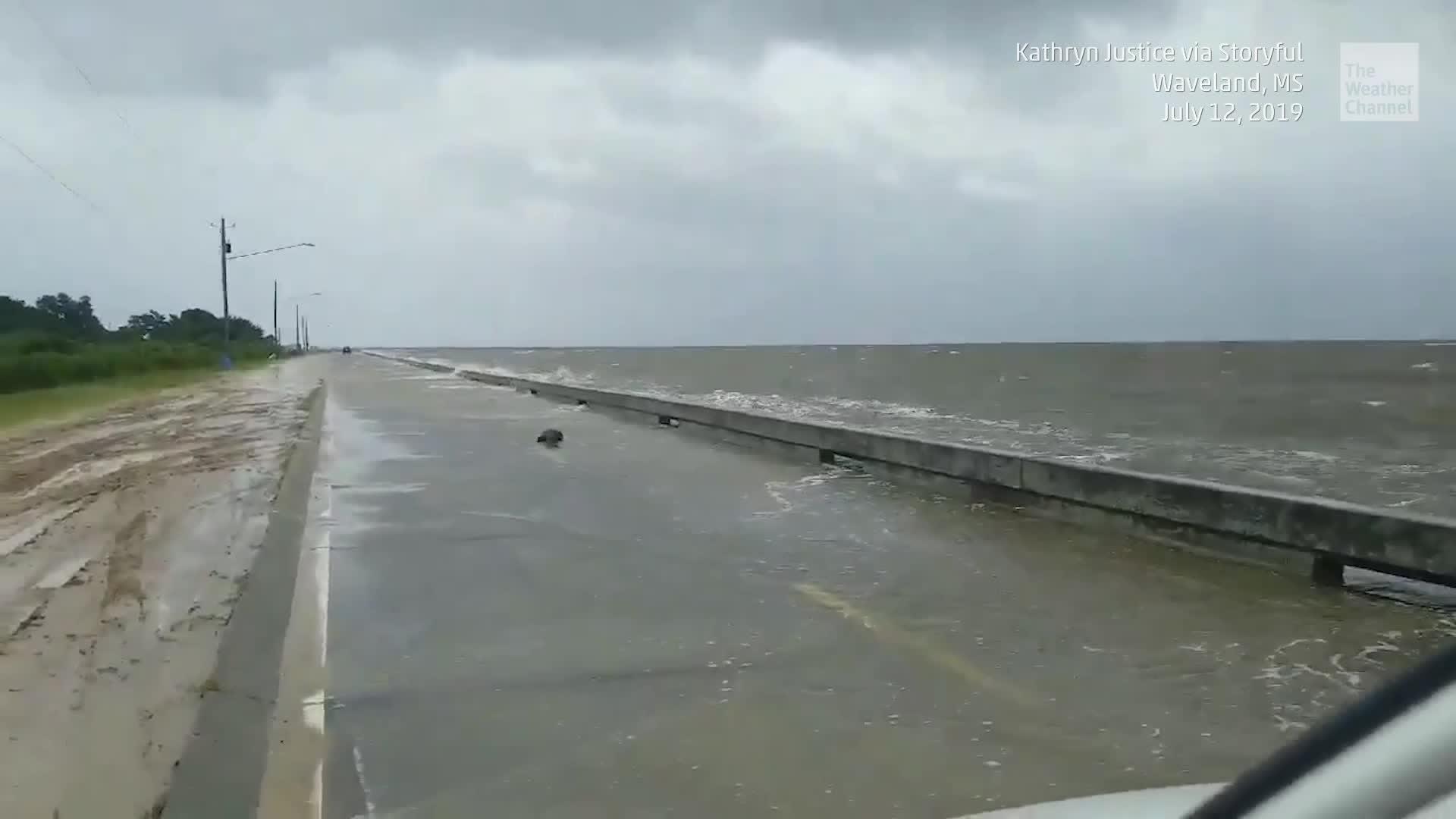 El huracán Barry causó inundaciones que desplazaron a animales peligrosos antes de tocar tierra.