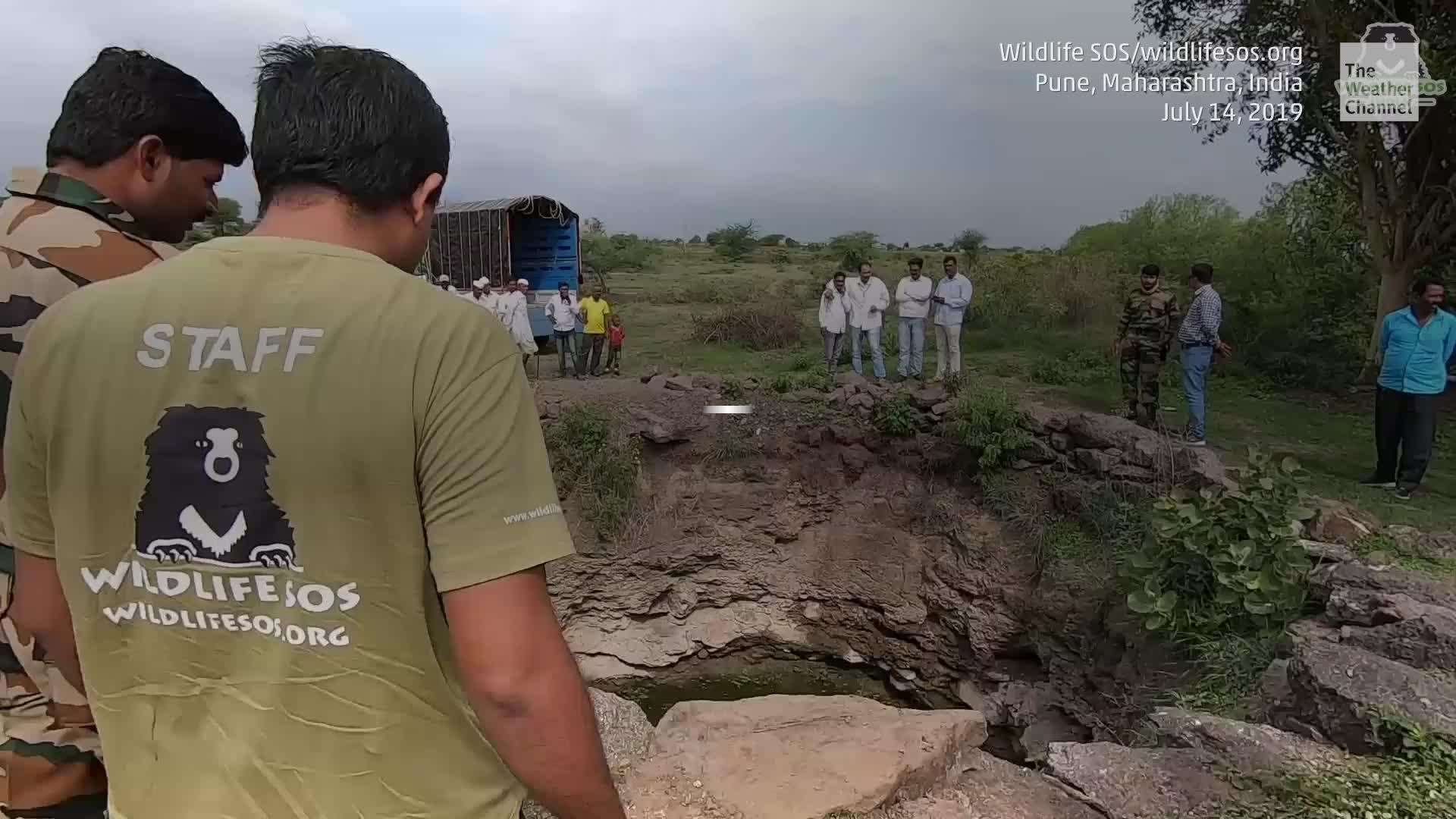 Mira el increíble rescate de un leopardo de cuatro años que cayó dentro de un pozo en una villa de India. Voluntarios y trabajadores forestales unieron esfuerzos para liberarlo.