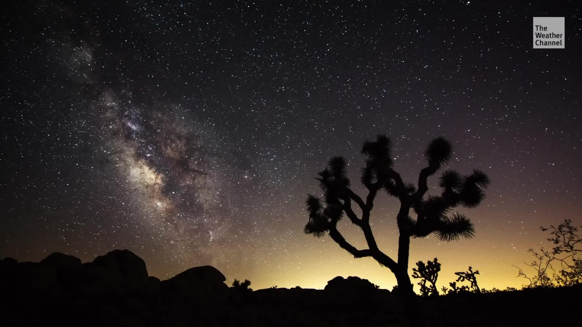 Un nuevo estudio encuentra que el cambio climático podría diezmar los árboles Joshua, icónicos del Suroeste.
