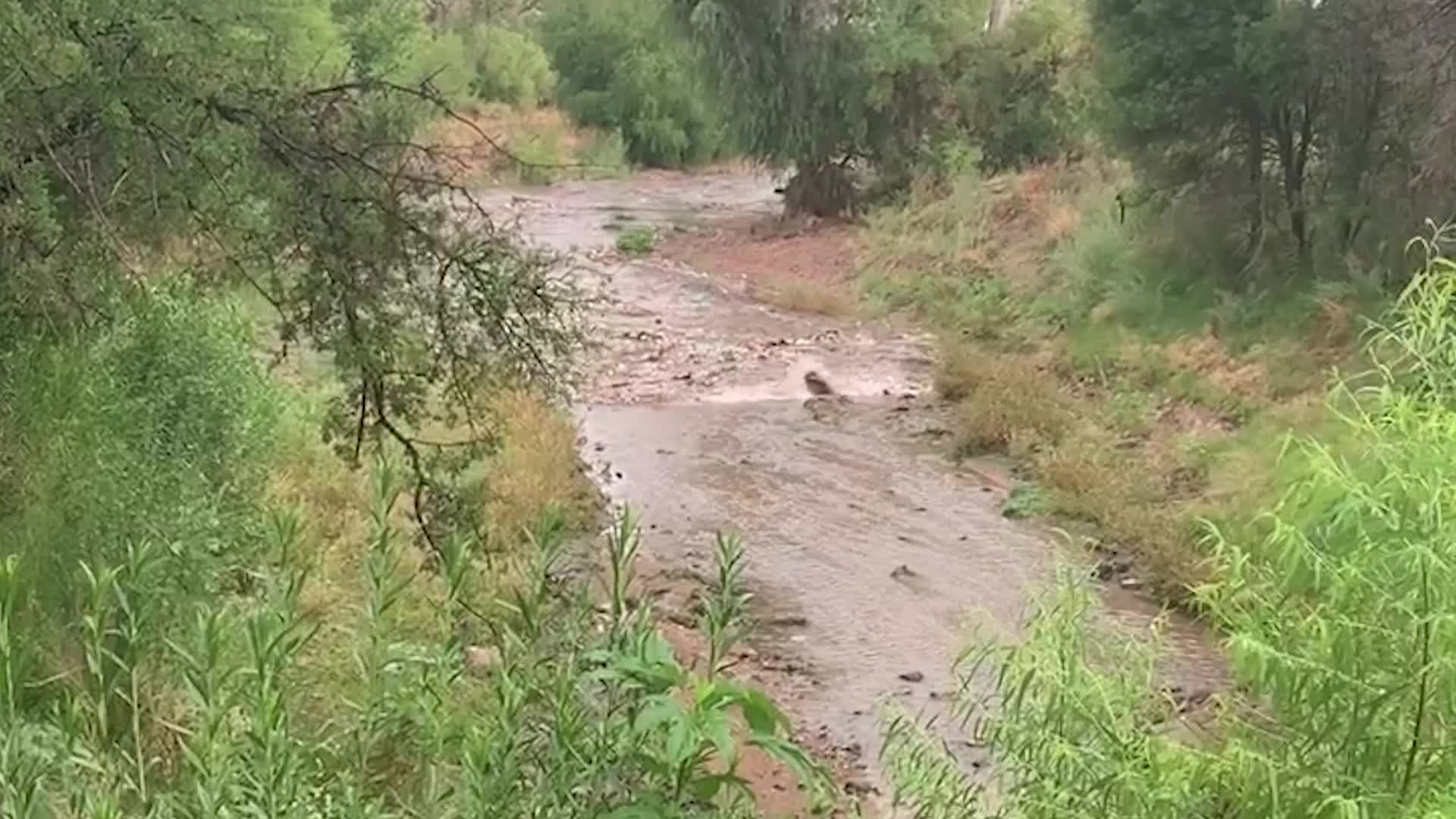 A flash flood was caught on camera rushing down a creek near Rio Rico, Arizona. During the summer, flash flooding of a dry creek bed is a common occurrence in the Desert Southwest.