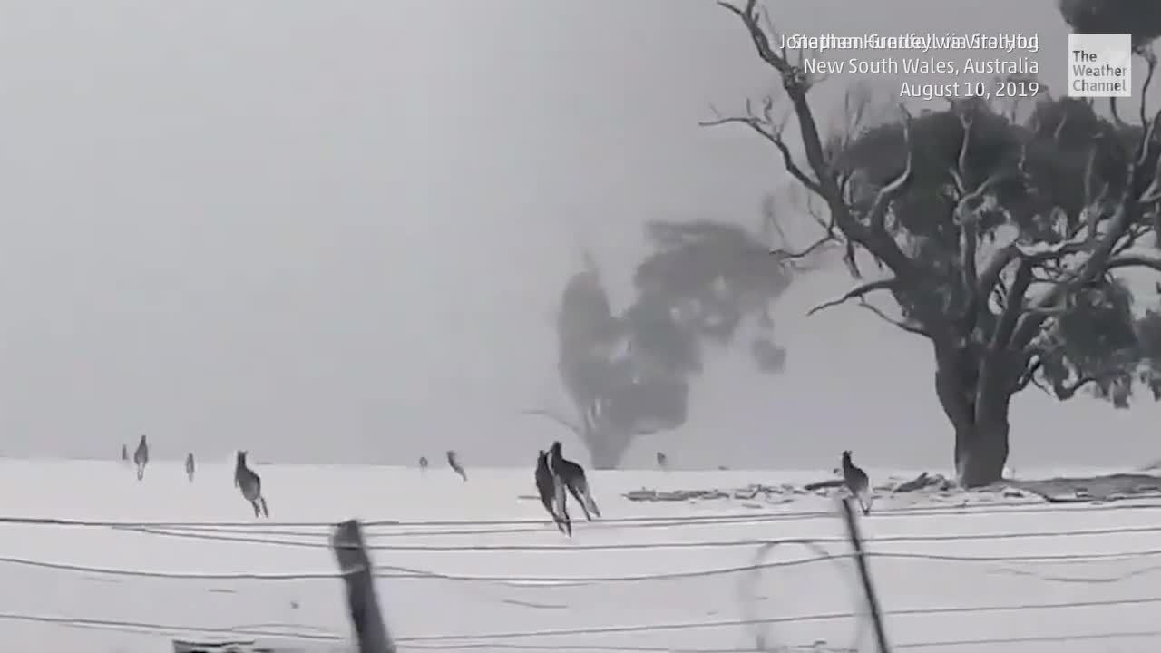 Mira los videos de animales más increíbles que sucedieron esta semana.