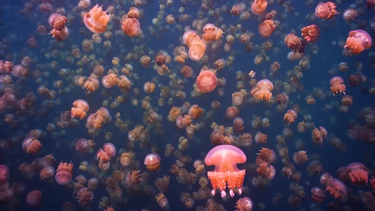 Swimming in Palau's Surreal Jellyfish Lake