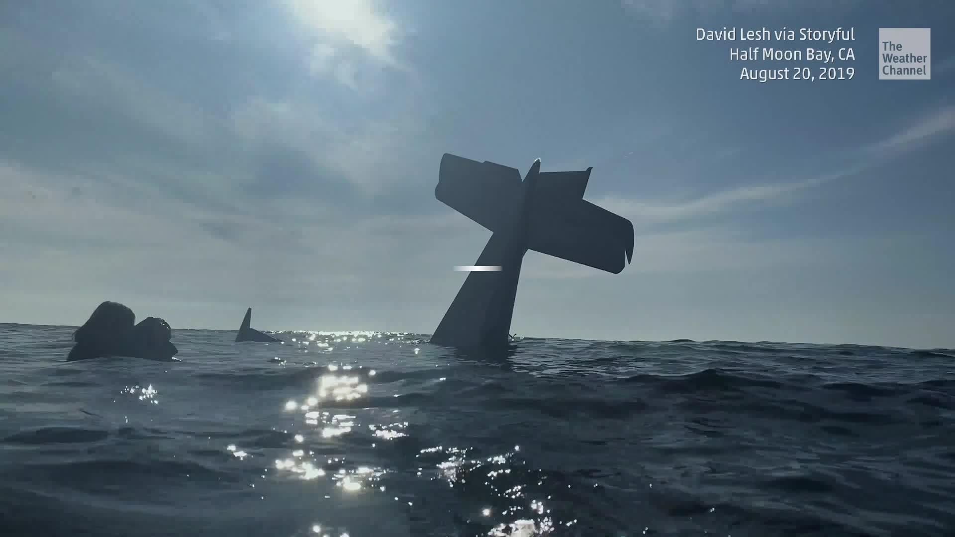 Un piloto se vio obligado a aterrizar de emergencia con un pasajero a bordo en el océano frente a la costa del norte de California. Afortunadamente, un helicóptero de la Guardia Costera de los Estados Unidos respondió rápidamente y los rescató.