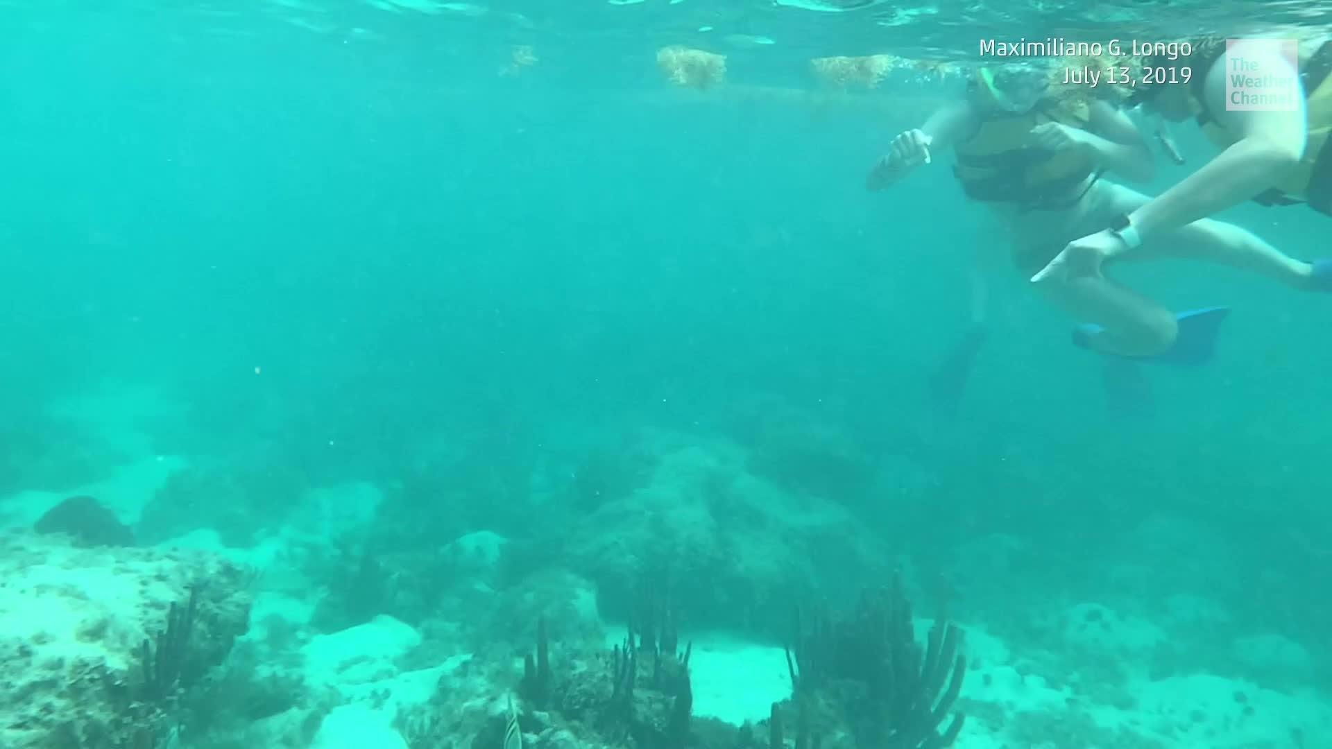 Ven a conocer las esculturas de la galería submarina en Punta Nizuc. Es parte el Museo Subacuático de Arte (MUSA) ubicado al final de la línea hotelera en Cancún, México que cuenta con más de 500 esculturas que promueven la conservación de los corales.