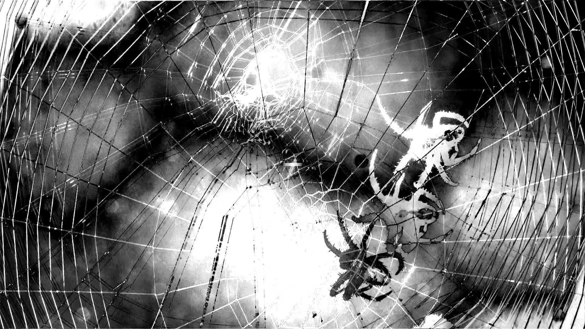 Si las arañas te asustan, este nuevo estudio podría hacerte instar a la acción climática. Los investigadores encontraron una consecuencia aterradora de los ciclones tropicales intensificados por el cambio climático.