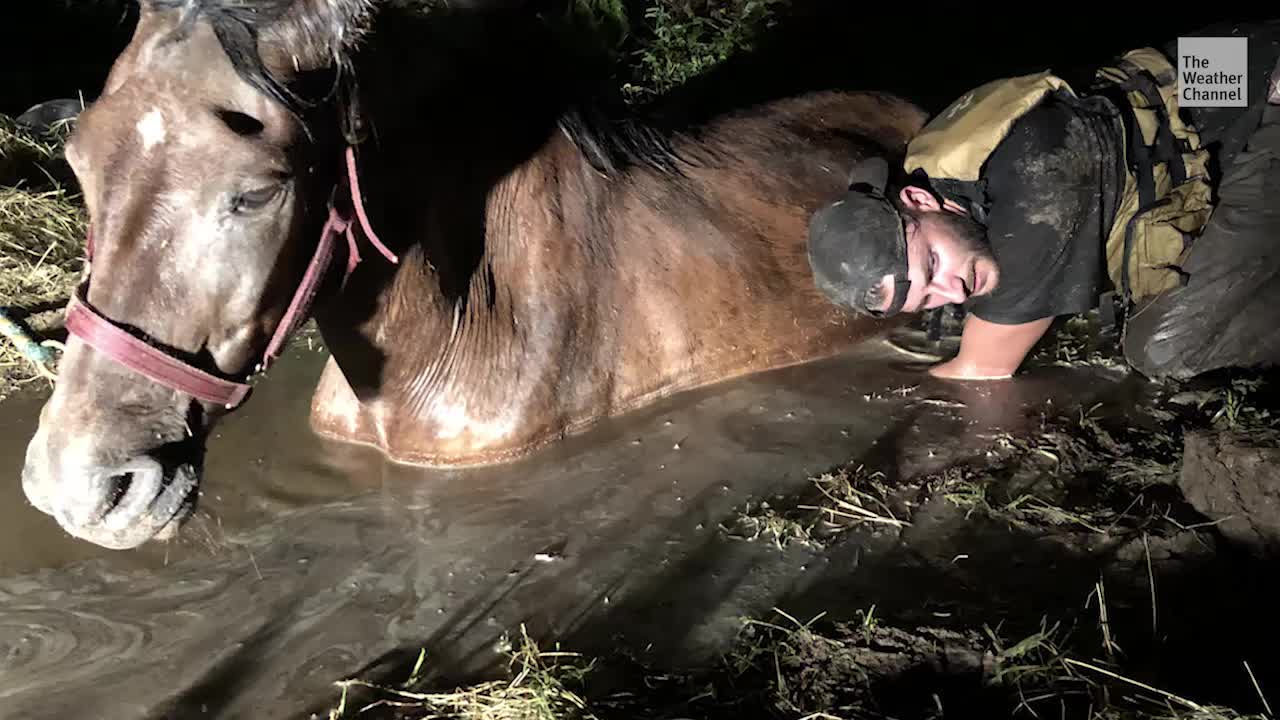 Horse Rescued From Mud During Imelda