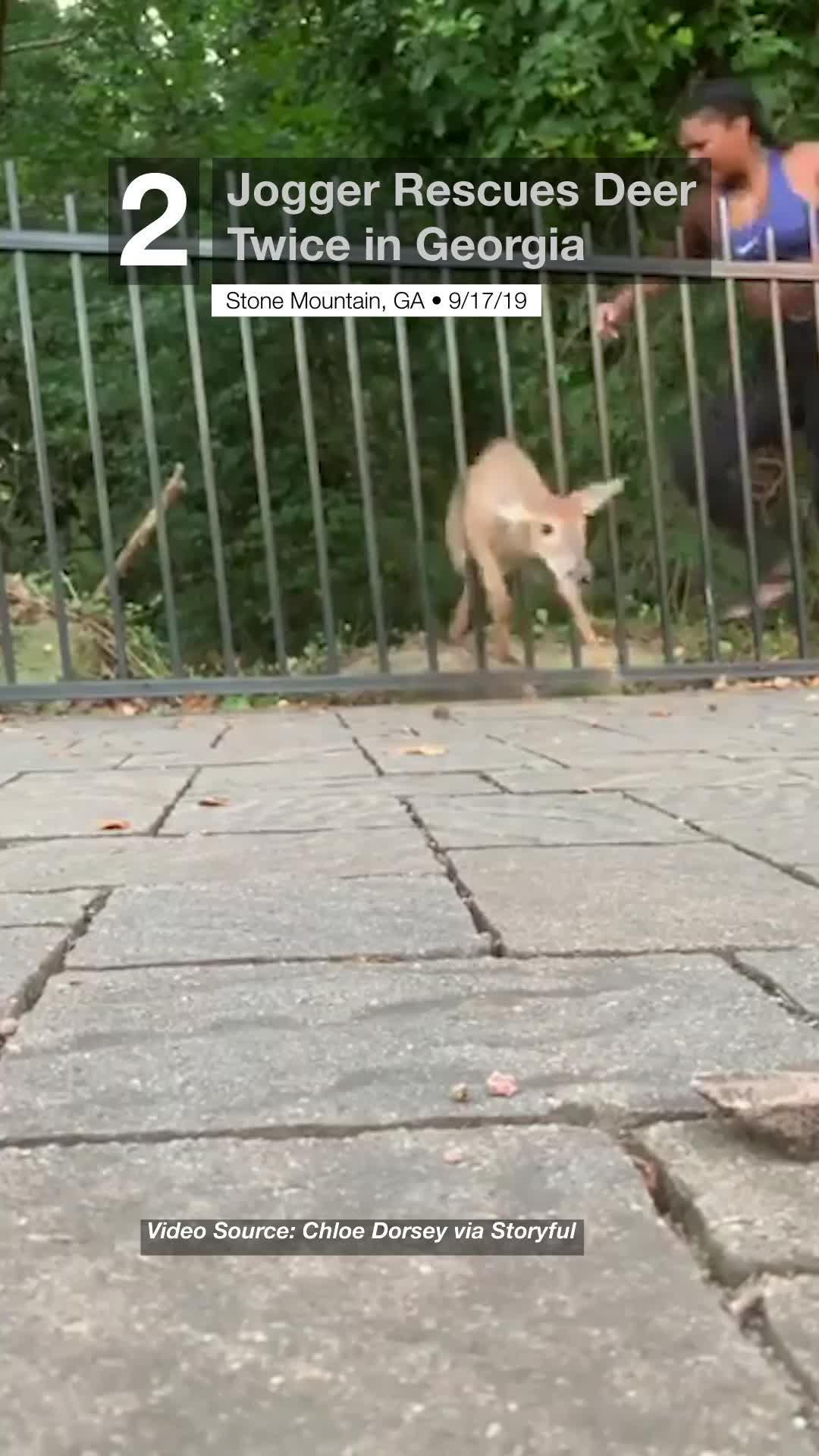 Jogger Rescues Deer Twice in Georgia