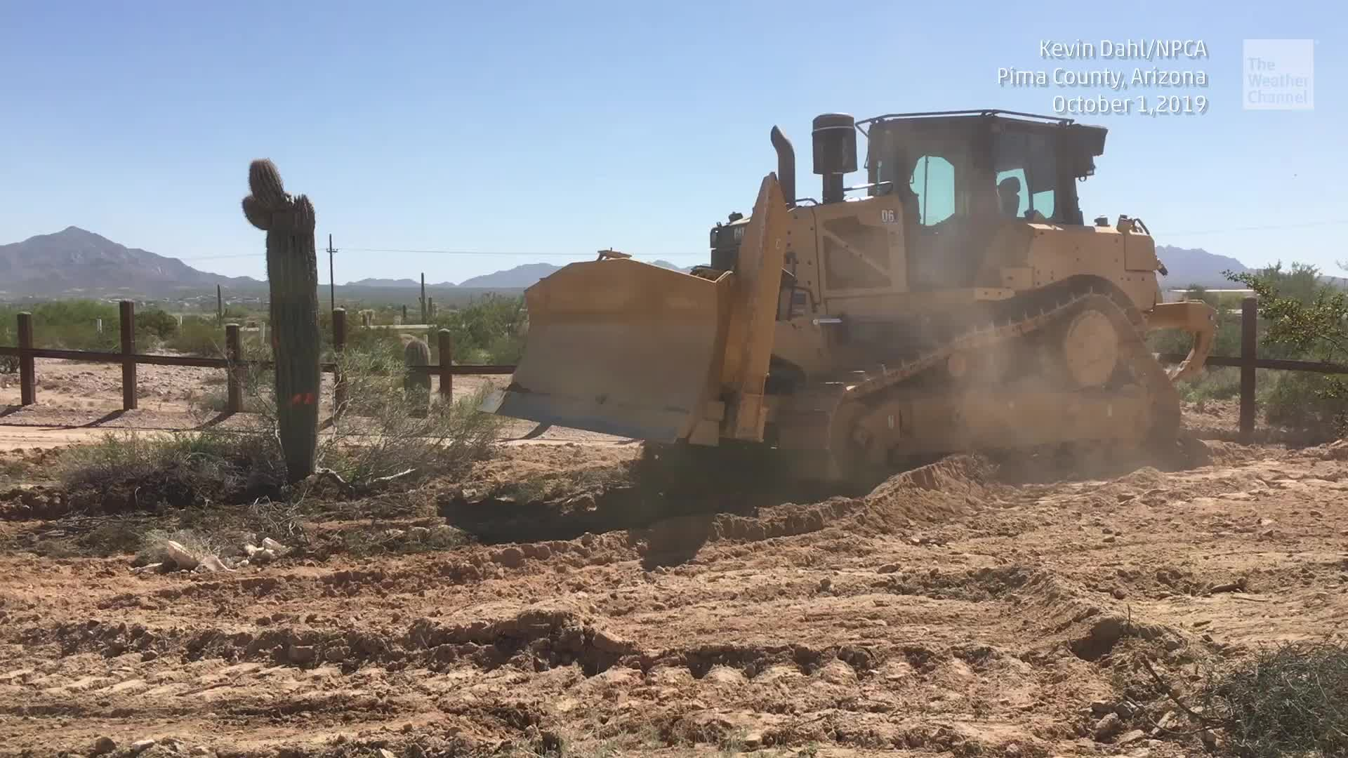 Outrage mounts as video shows iconic saguaro cactuses being bulldozed in Arizona to build President Trump's border wall.