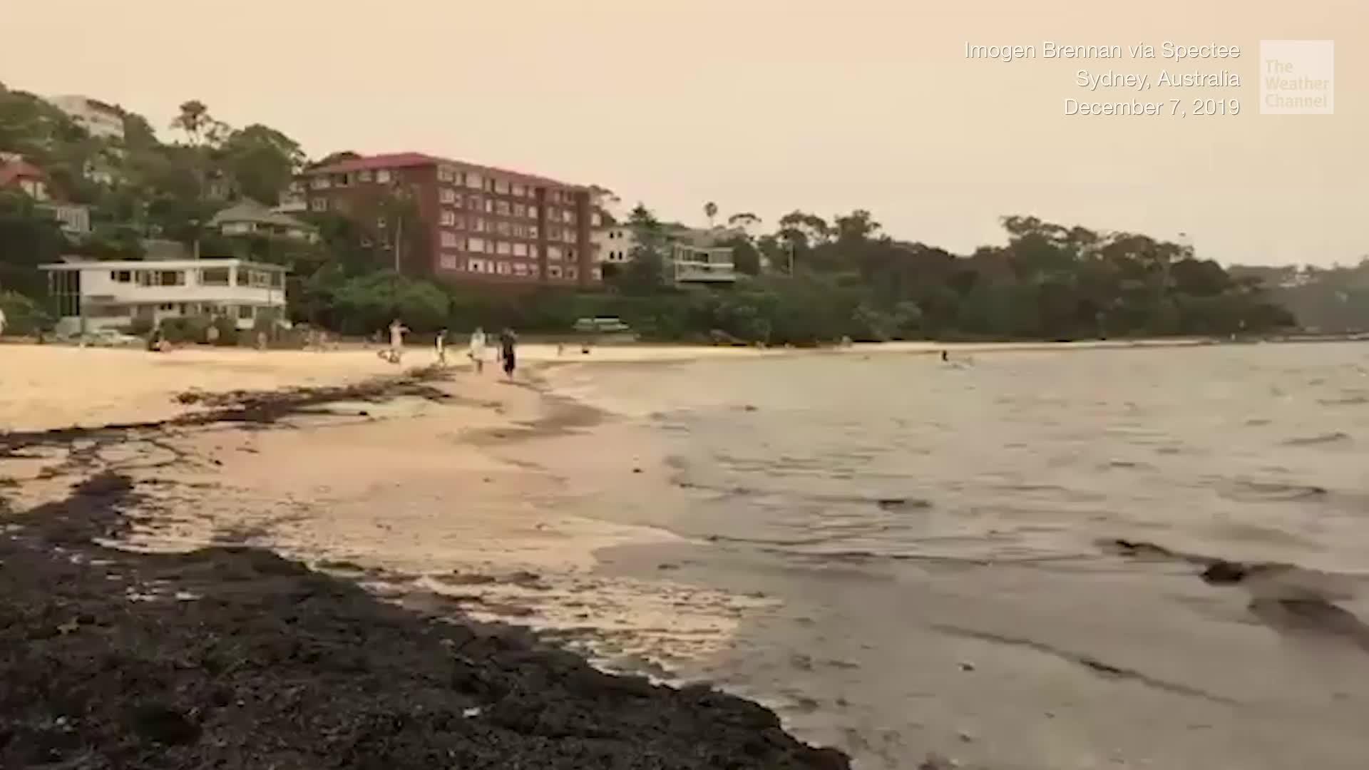 Cenizas de los incendios forestales en Australia han cubierto de una mancha negra las playas de Sydney y New South Wales.