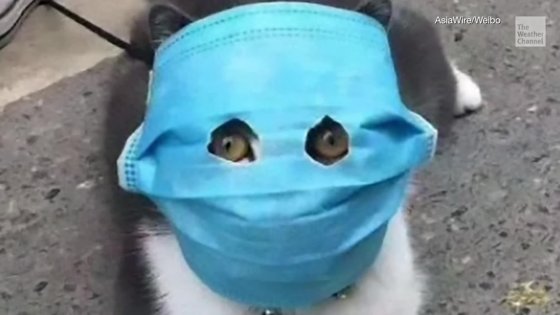 Face Masks for Felines Necessary? thumbnail