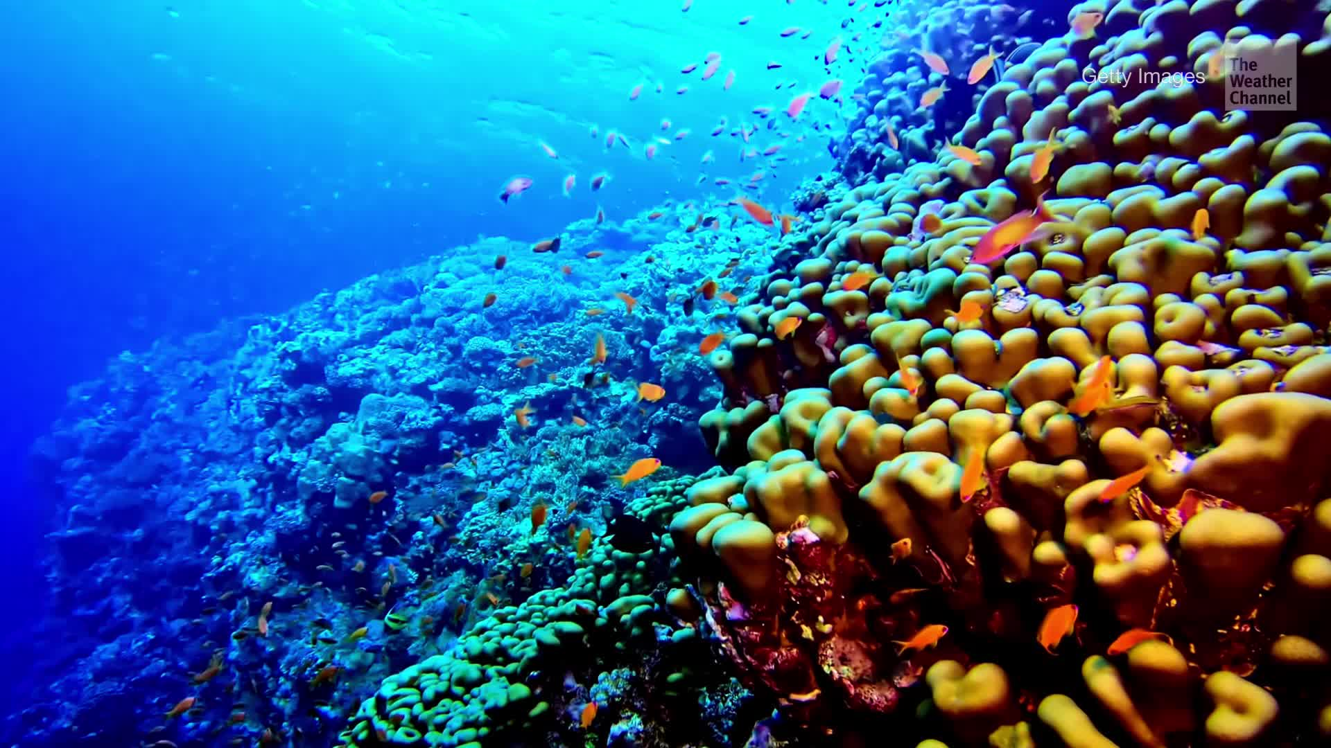 All of the world's coral reef habitats will be wiped out as our oceans become increasingly warm and acidic due to climate change and pollution, according to new research released at the annual Ocean Sciences Meeting.