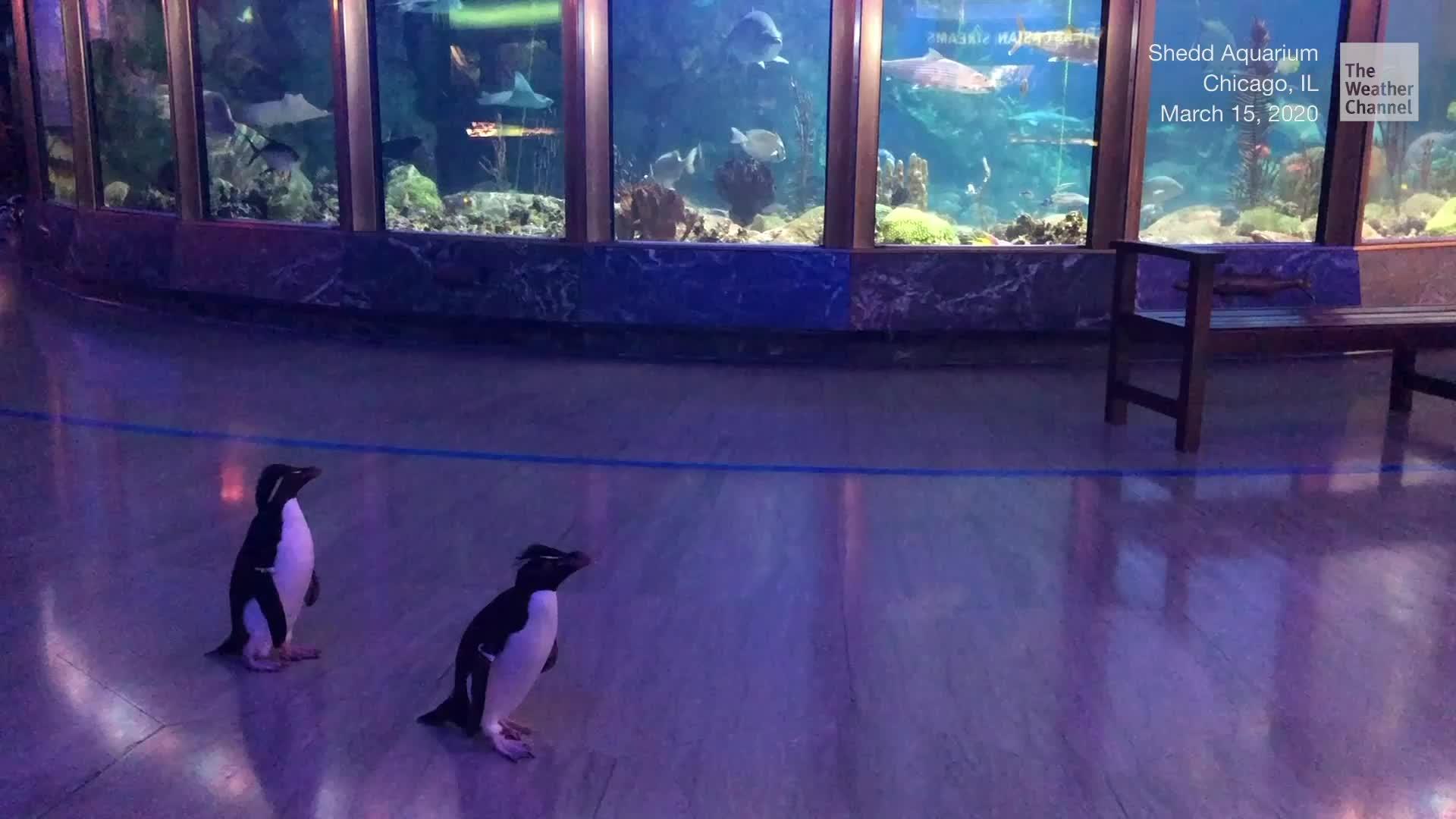Pingüinos van en día de campo tras cierre de Acuario