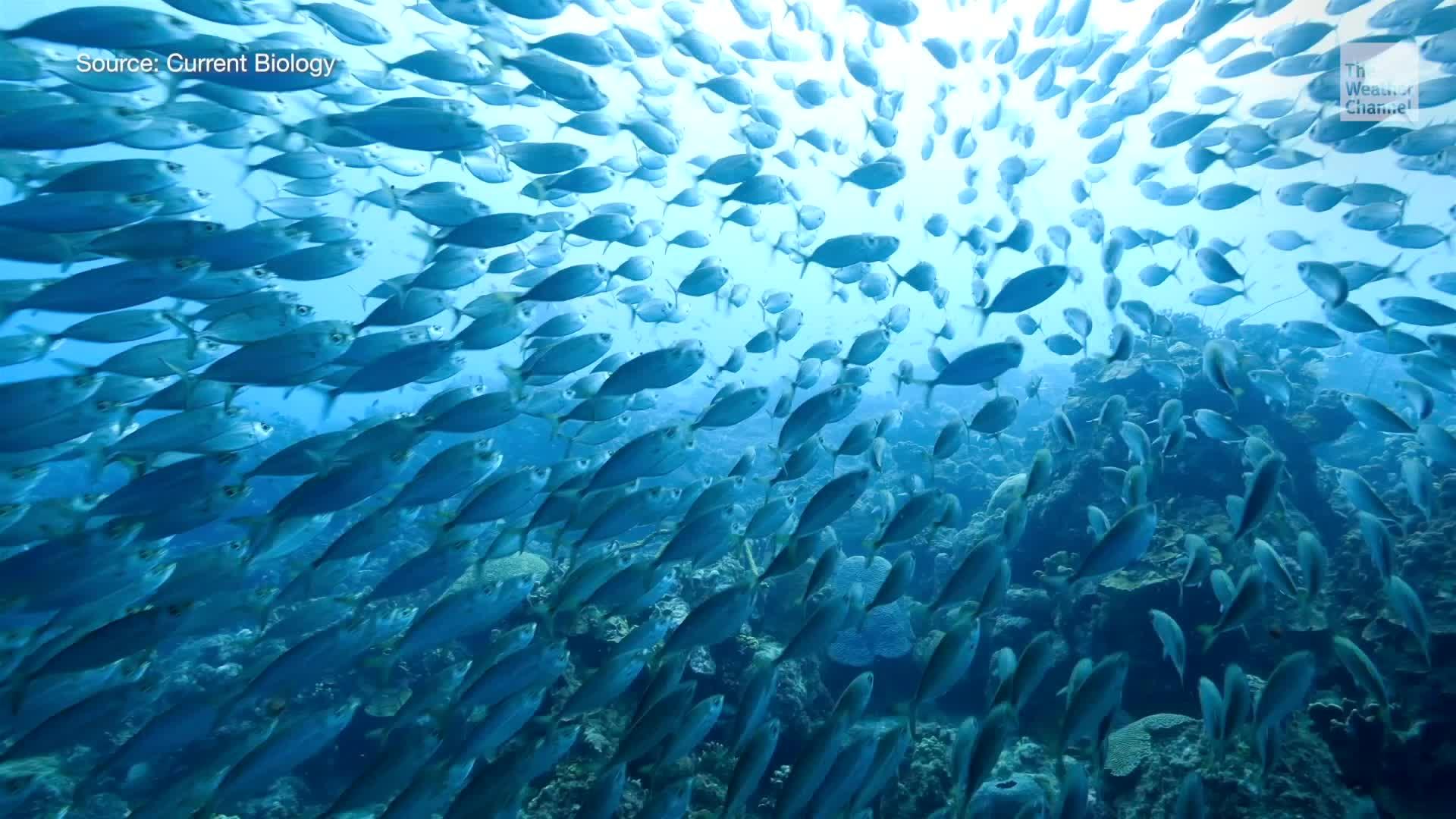 El calentamiento de los océanos causa un efecto problemático en los animales marinos.