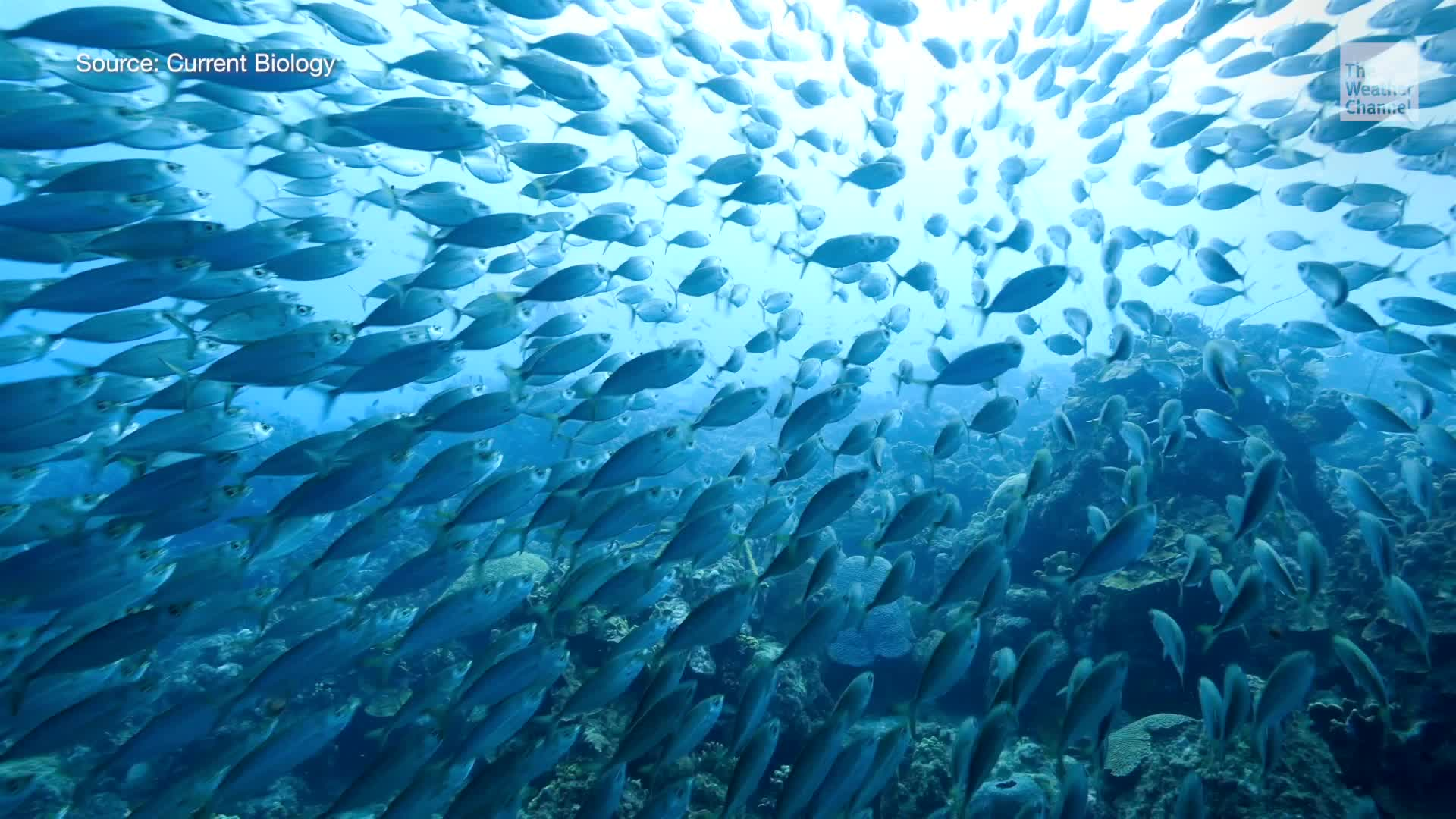 Warming oceans are causing marine species to move poleward. Here's why that's a problem.