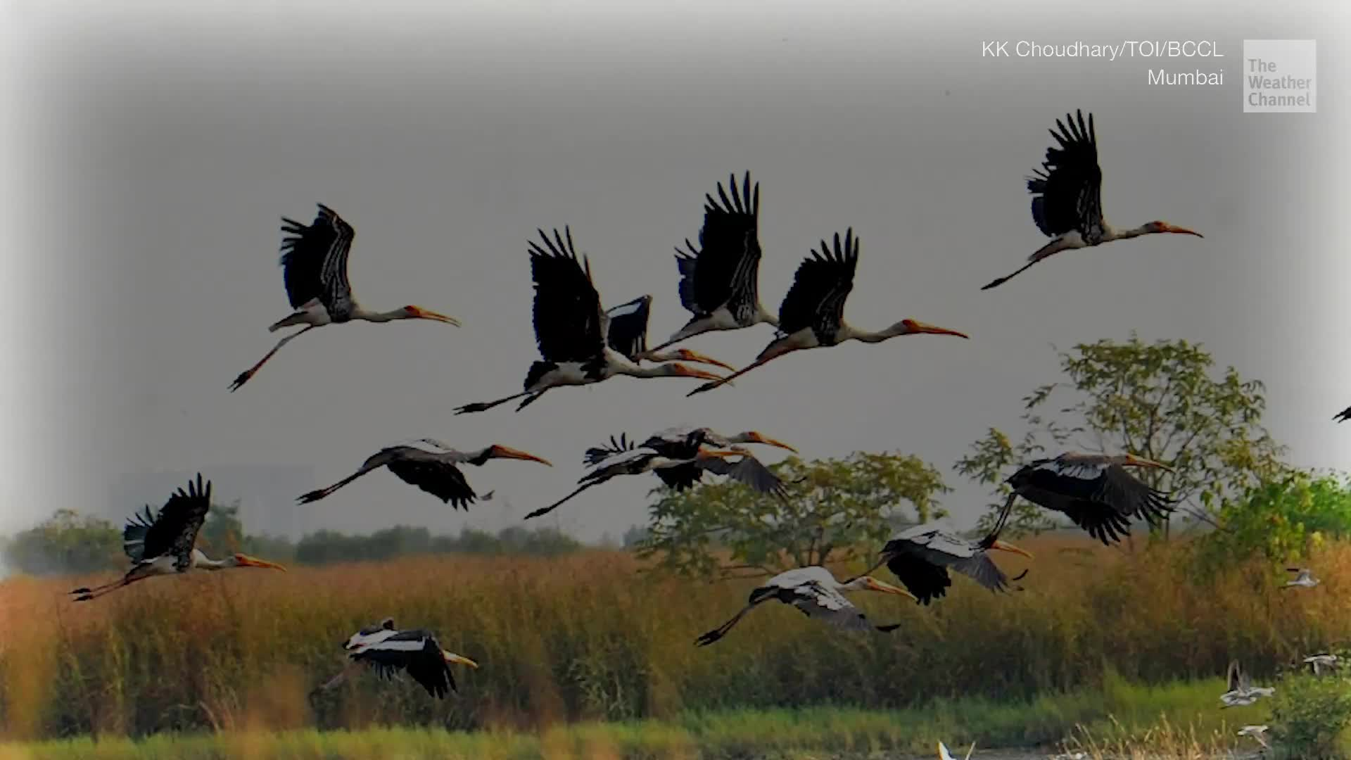 World Migratory Bird Day: Threats that Endanger Winged Visitors Through their Journey