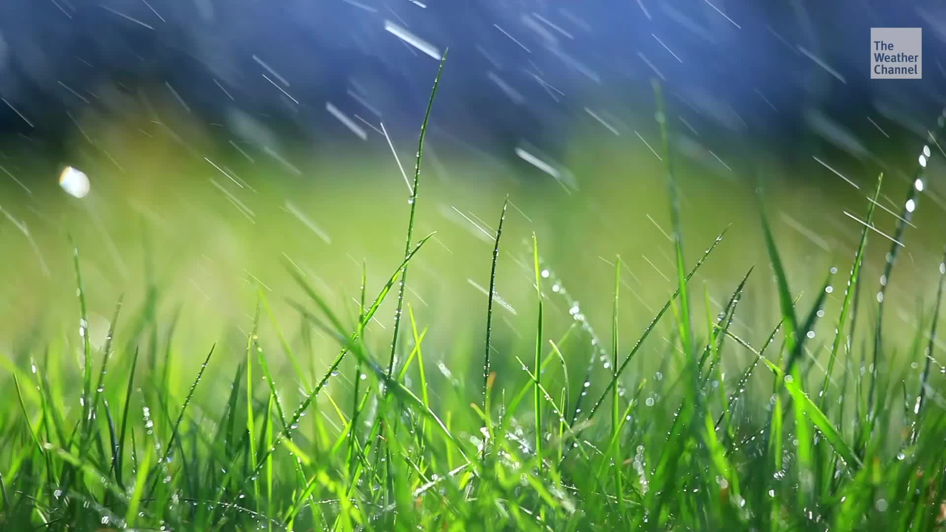 La lluvia puede empeorar tus alergias