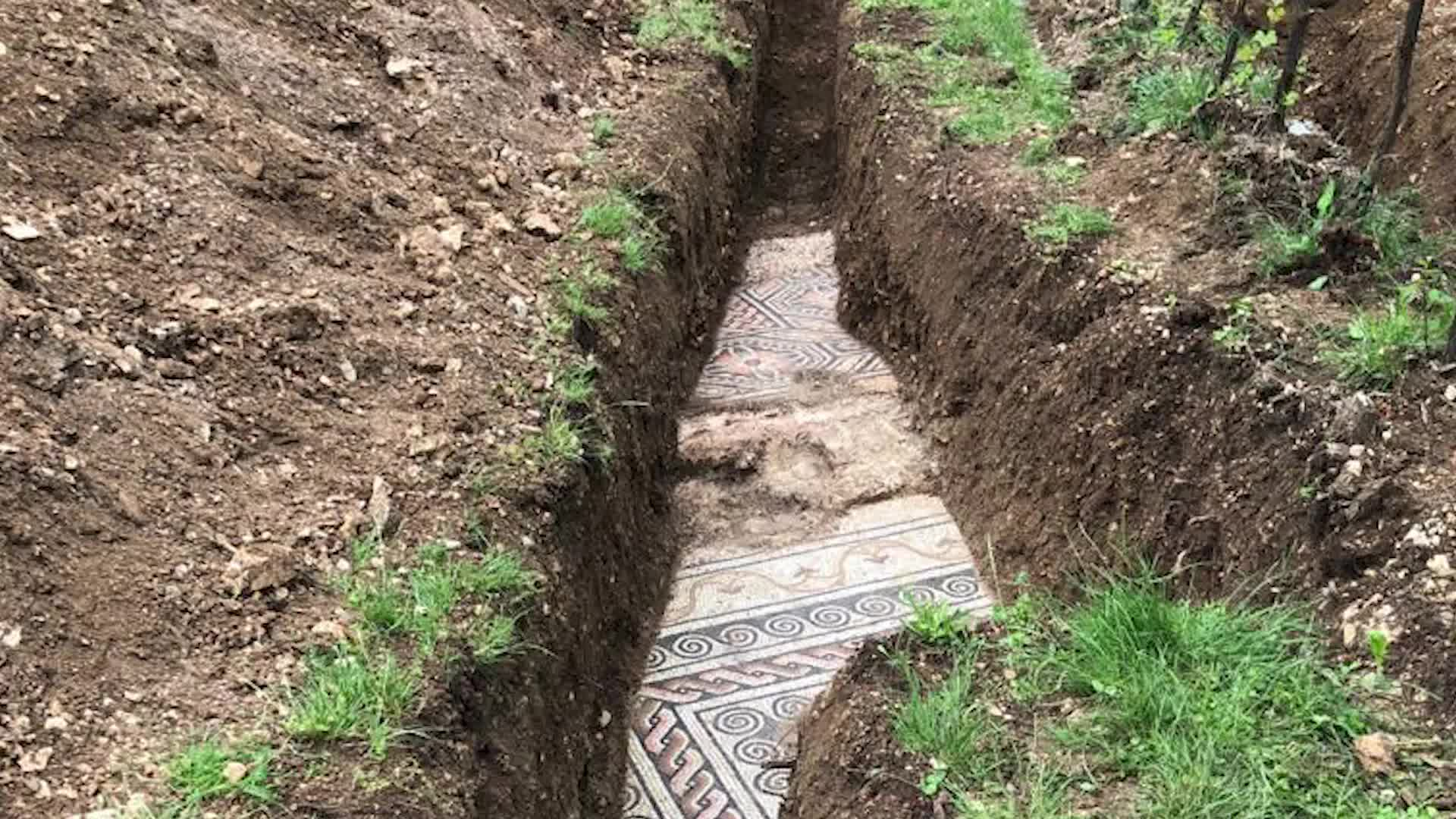 A mosaic tile floor was discovered buried under a vineyard in a small town north of Verona, Italy.