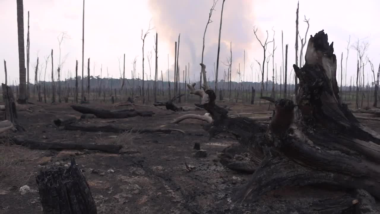 Forest Loss in 2019 Equivalent to Emissions from 400 Million Cars