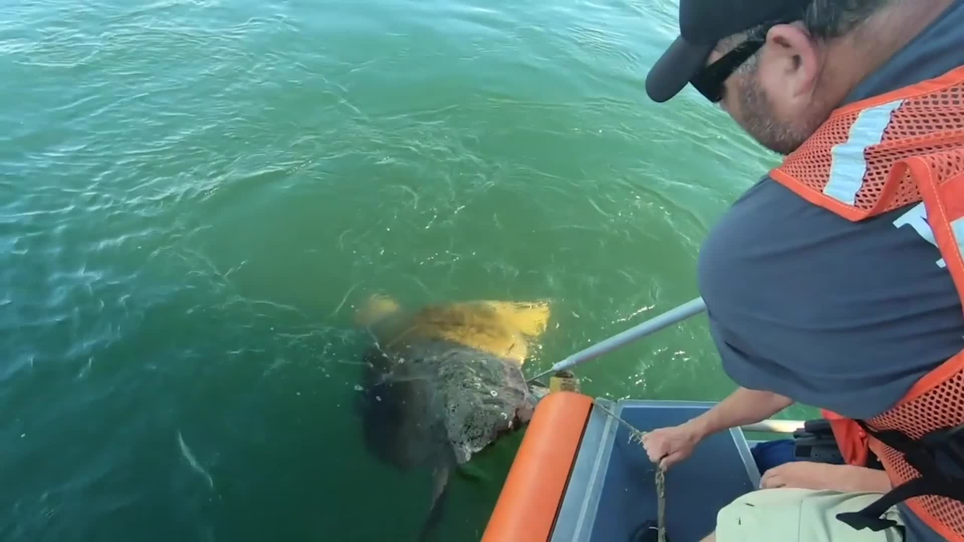 La Guardia Costera rescata a la tortuga