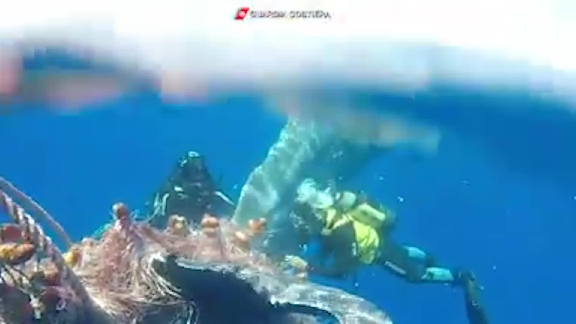 Cachalote liberado de una red en Italia