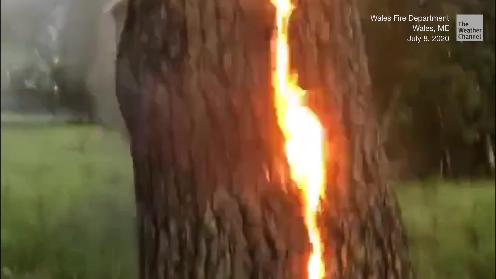Flames Burst Through Tree After Lightning Strike