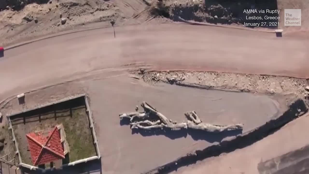 Ancient Petrified Tree Found Intact in Greece - Videos from The Weather Channel | weather.com