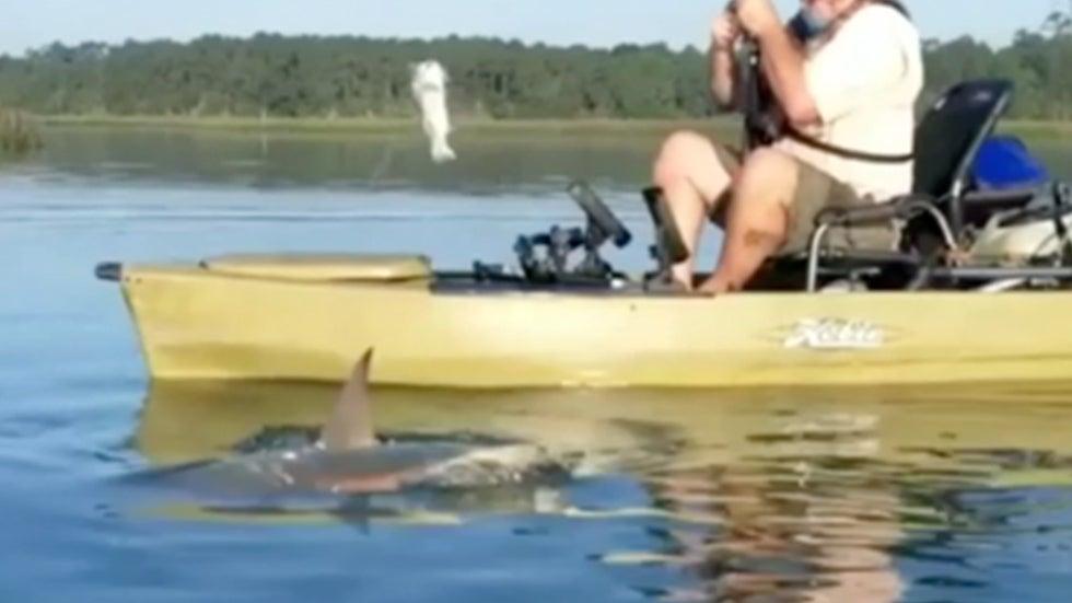 Shark Pulls Kayaker Around Murrells Inlet, South Carolina