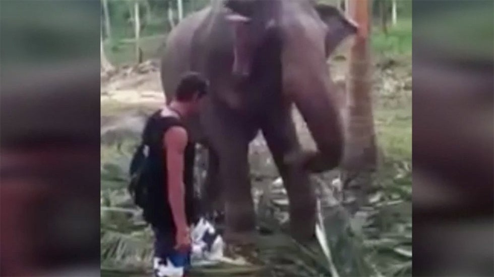 Elephant Knocks Down Man Who Touches its Trunk