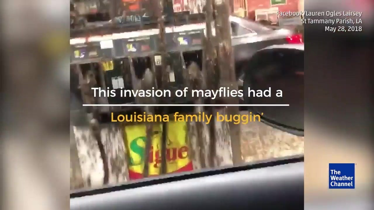 Millions of mayflies swarm gas station in Louisiana