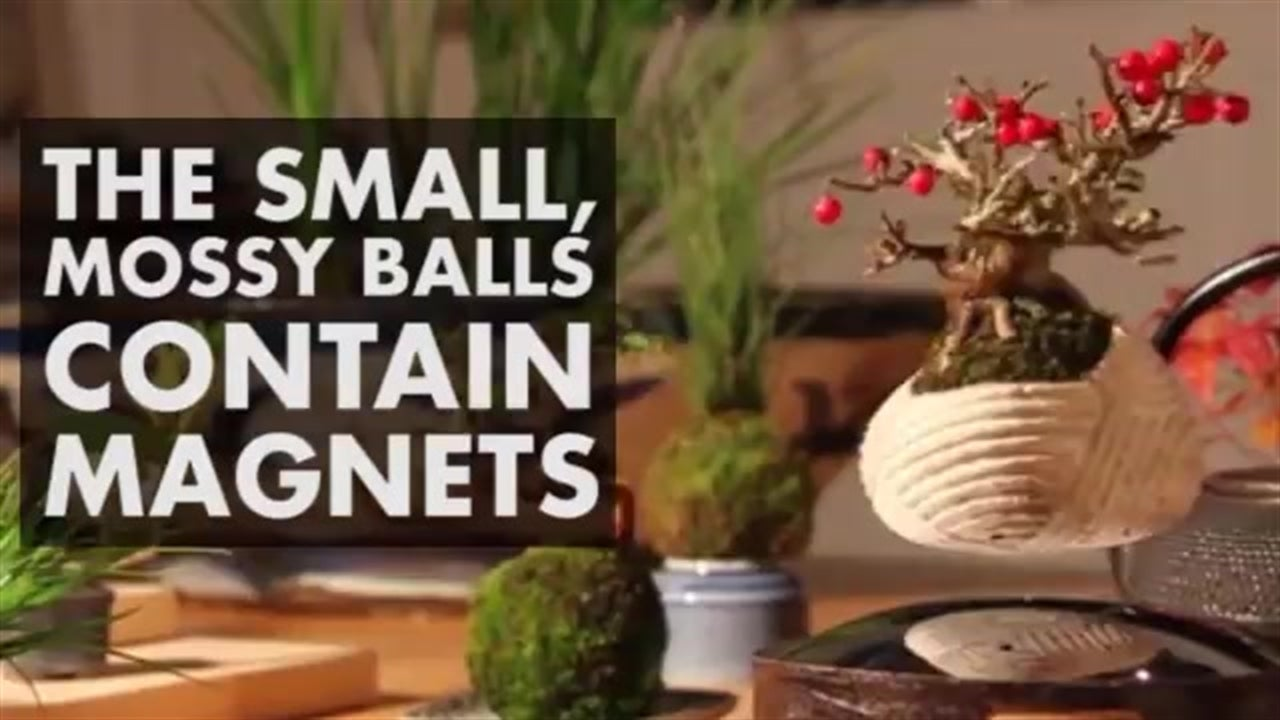 Levitating Bonsai Tree Becomes Trend In Japan Videos From The Weather Channel Weather Com
