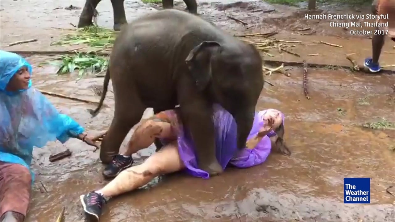 Baby Elephant In Thailand Just Wants To Cuddle With American Tourist