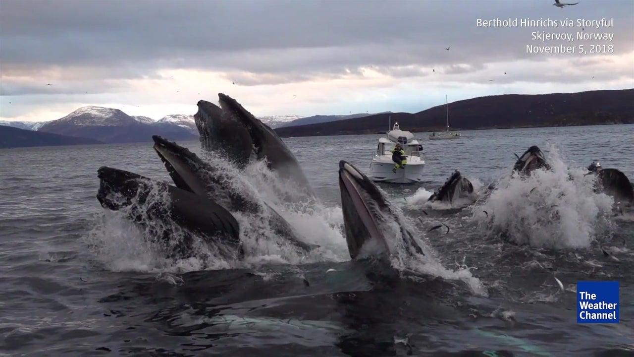 Baleias caçam em câmara lenta