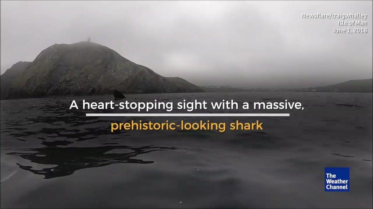 Kayakers Bump Into Huge Shark