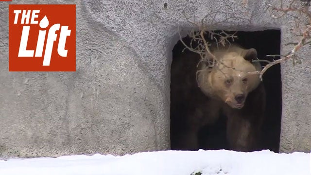 Bears Emerge From Hibernation a Month Early
