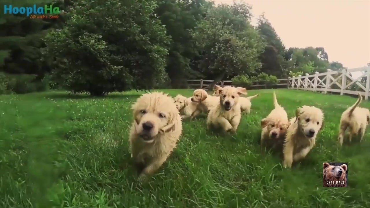 adorable puppies play in sprinkler the weather channel