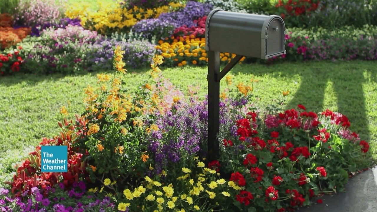 How To Plant a Beautiful Mailbox Garden