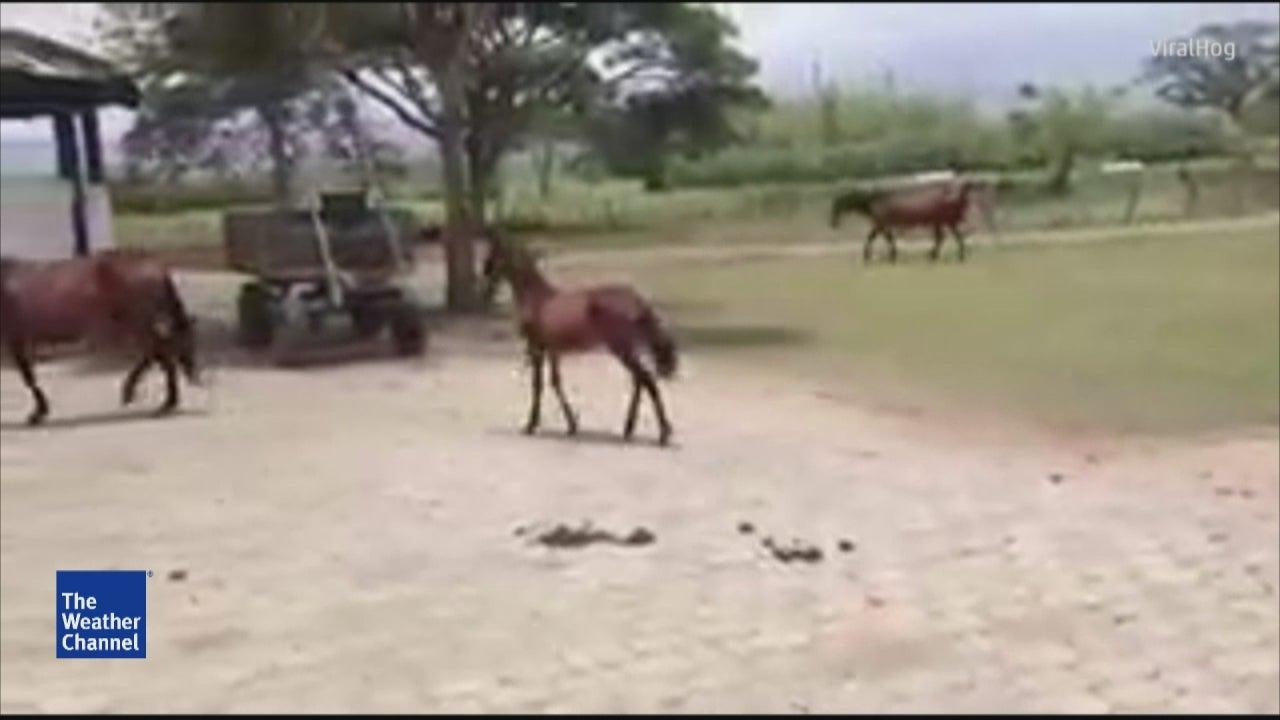 Tiny Horse Prancing