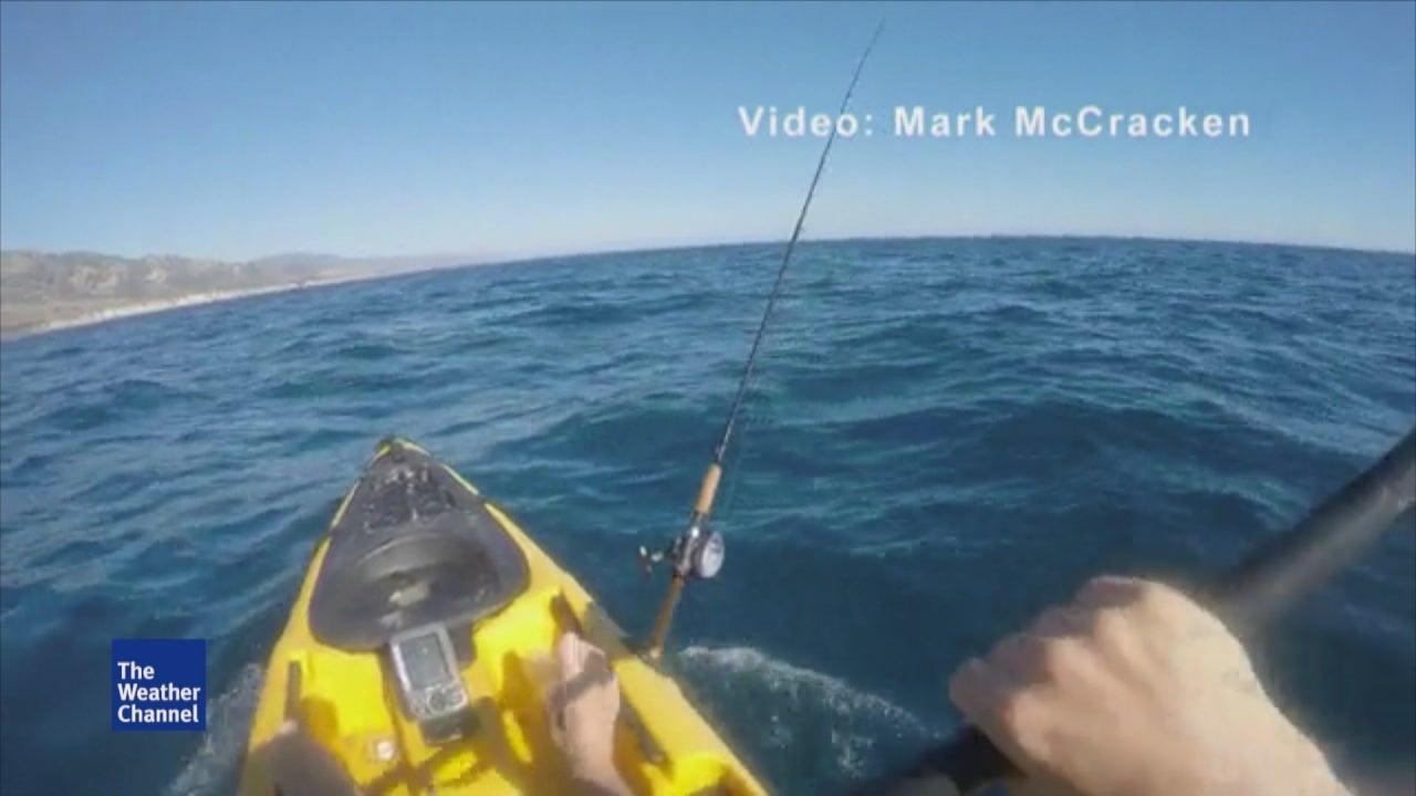 Kayaking Fisherman Fends of Aggressive Hammerhead