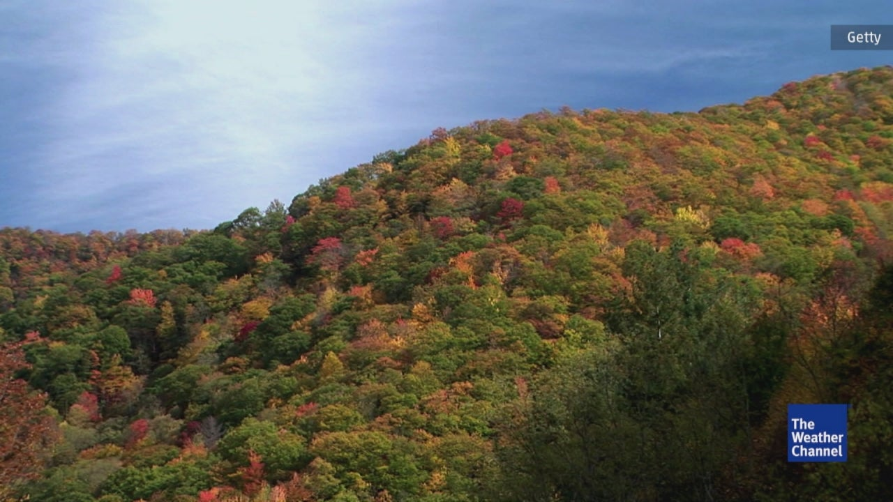 Why Do Leaves Change Colors And Fall?