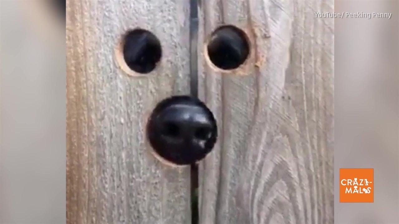 woman makes dog peep hole