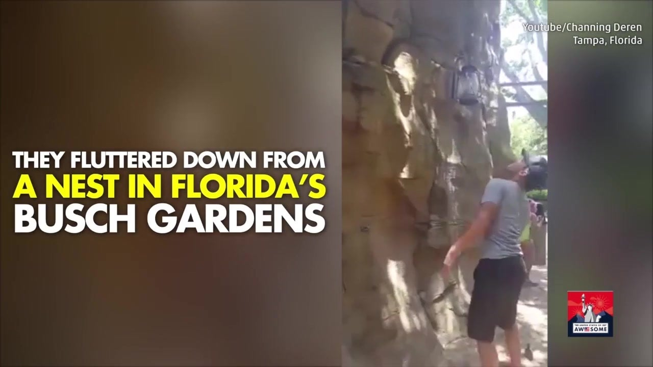 Tourist Saves Falling Ducklings at Busch Gardens | The Weather Channel