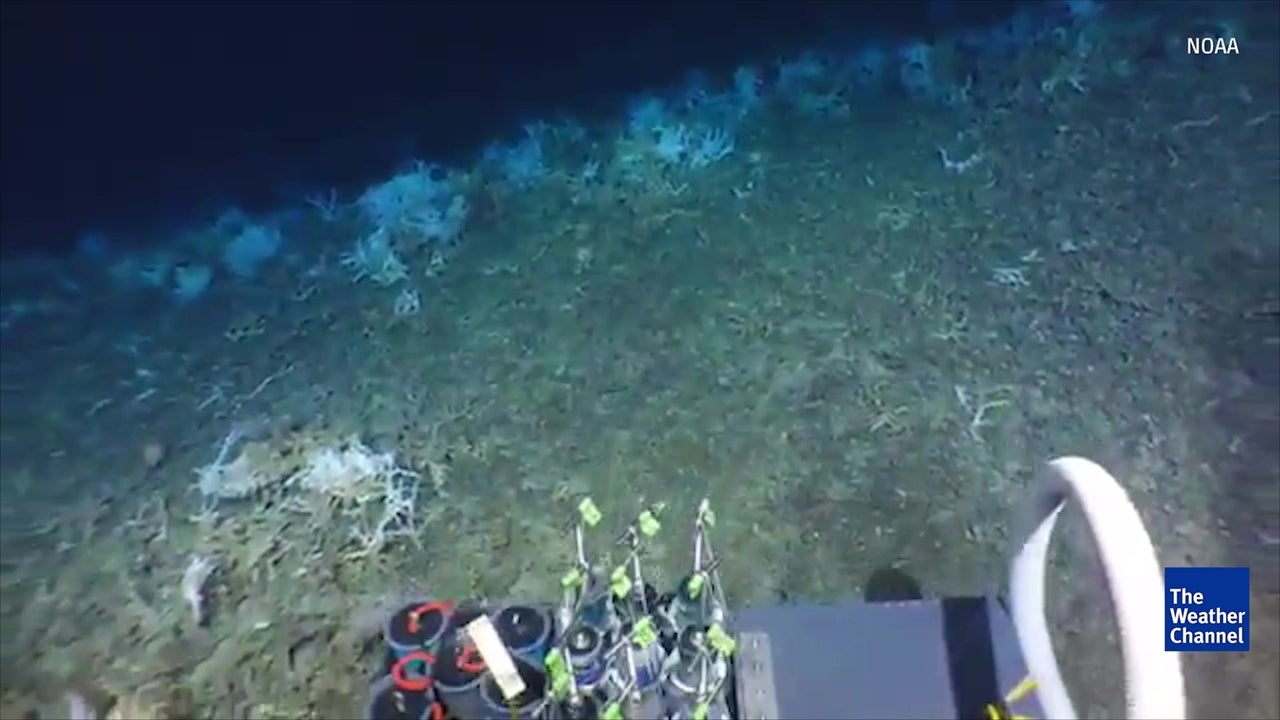 Giant coral reef discovered off Atlantic coast
