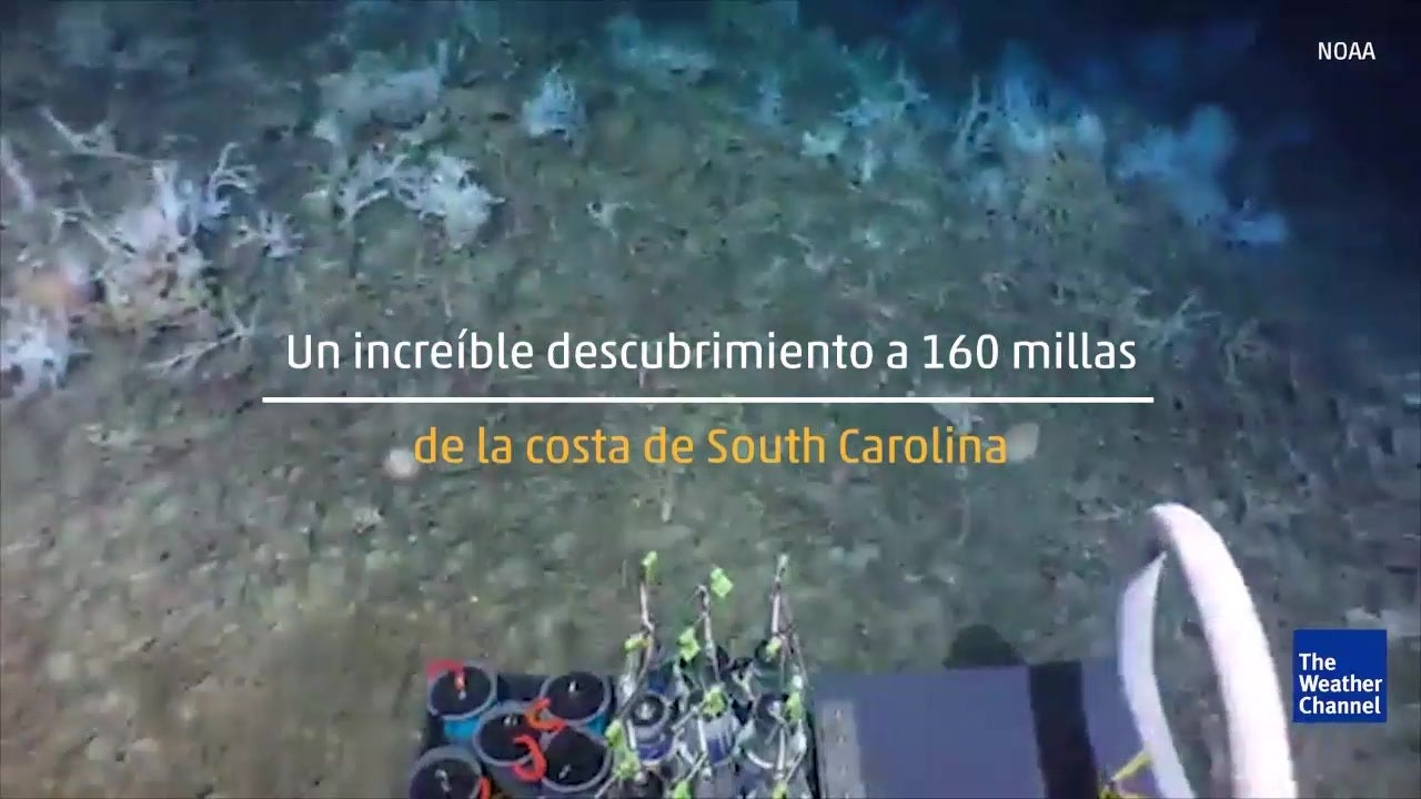 Científicos están maravillados por un extraño arrecife