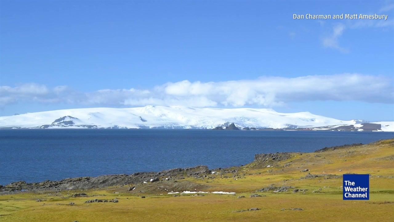 See Antarctica's shockingly lush landscape