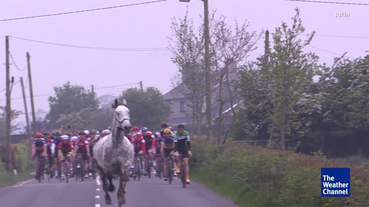 Watch: Horse joins bicycle race