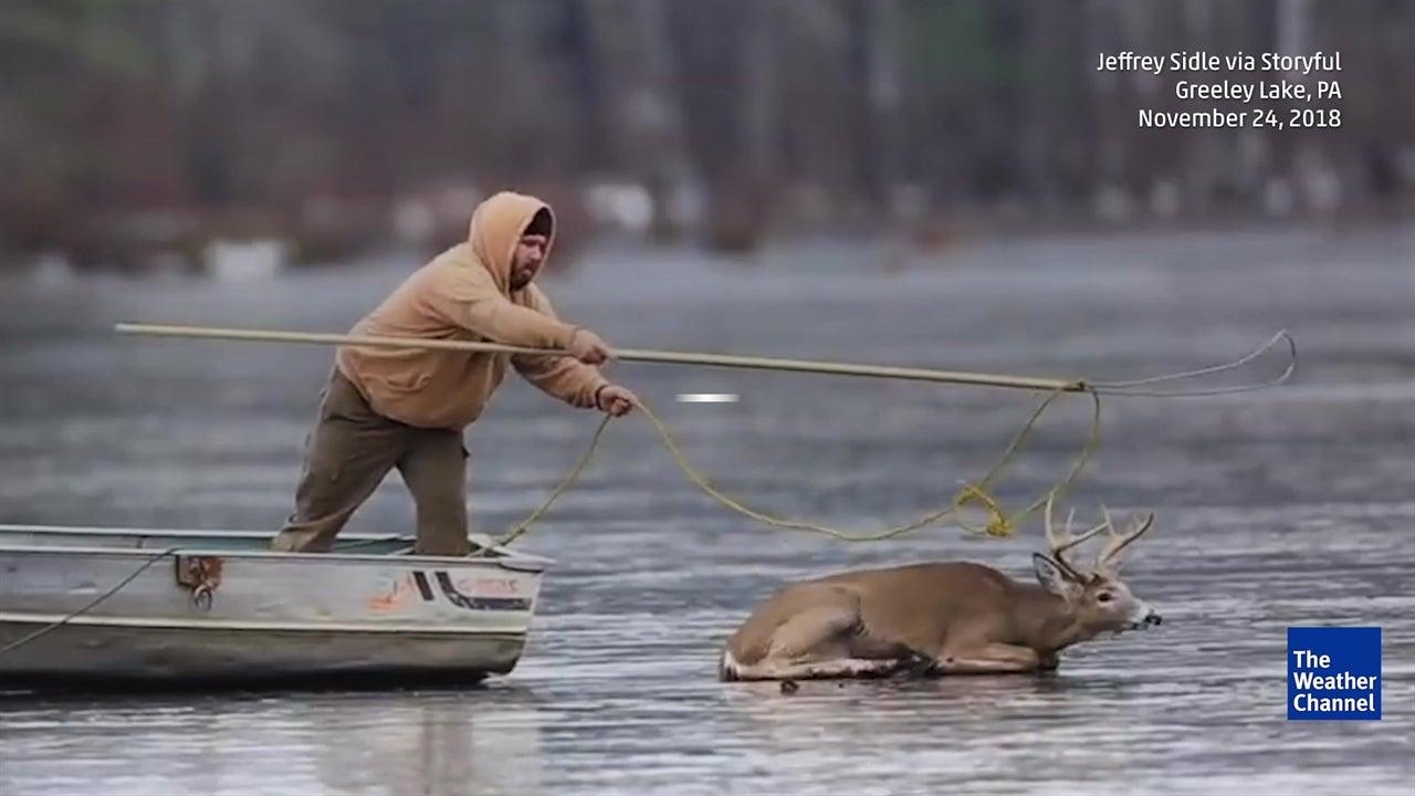 Hunters Rescue Deer Stuck on Ice